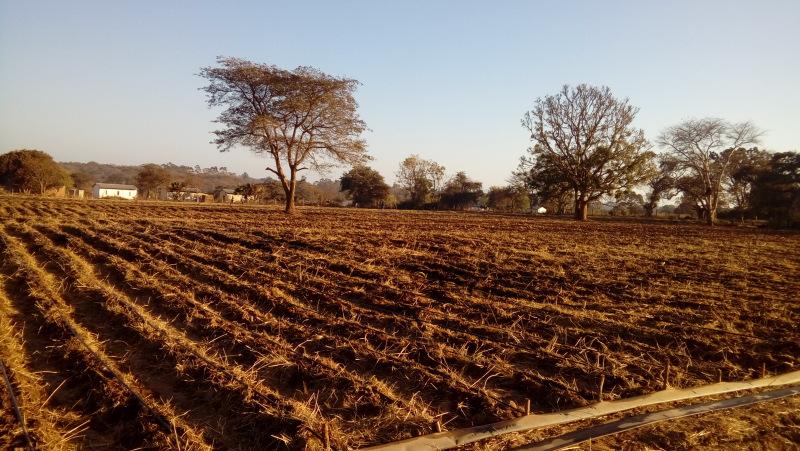 Zambia2017 (629)
